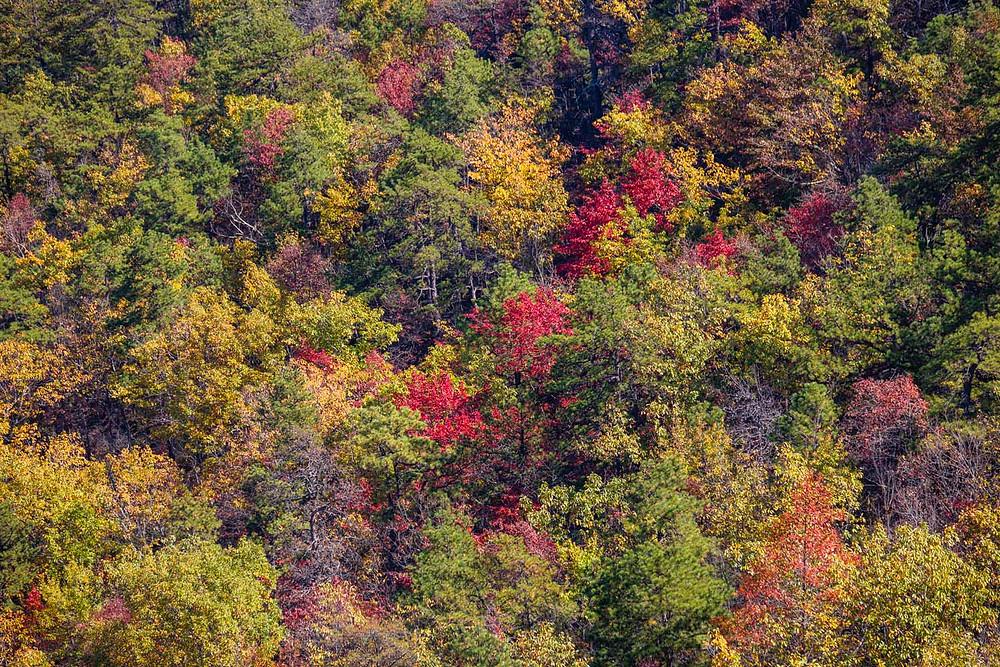 Fall down below - Pilot Mountain