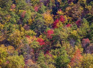 North Carolina Trip - October 2015