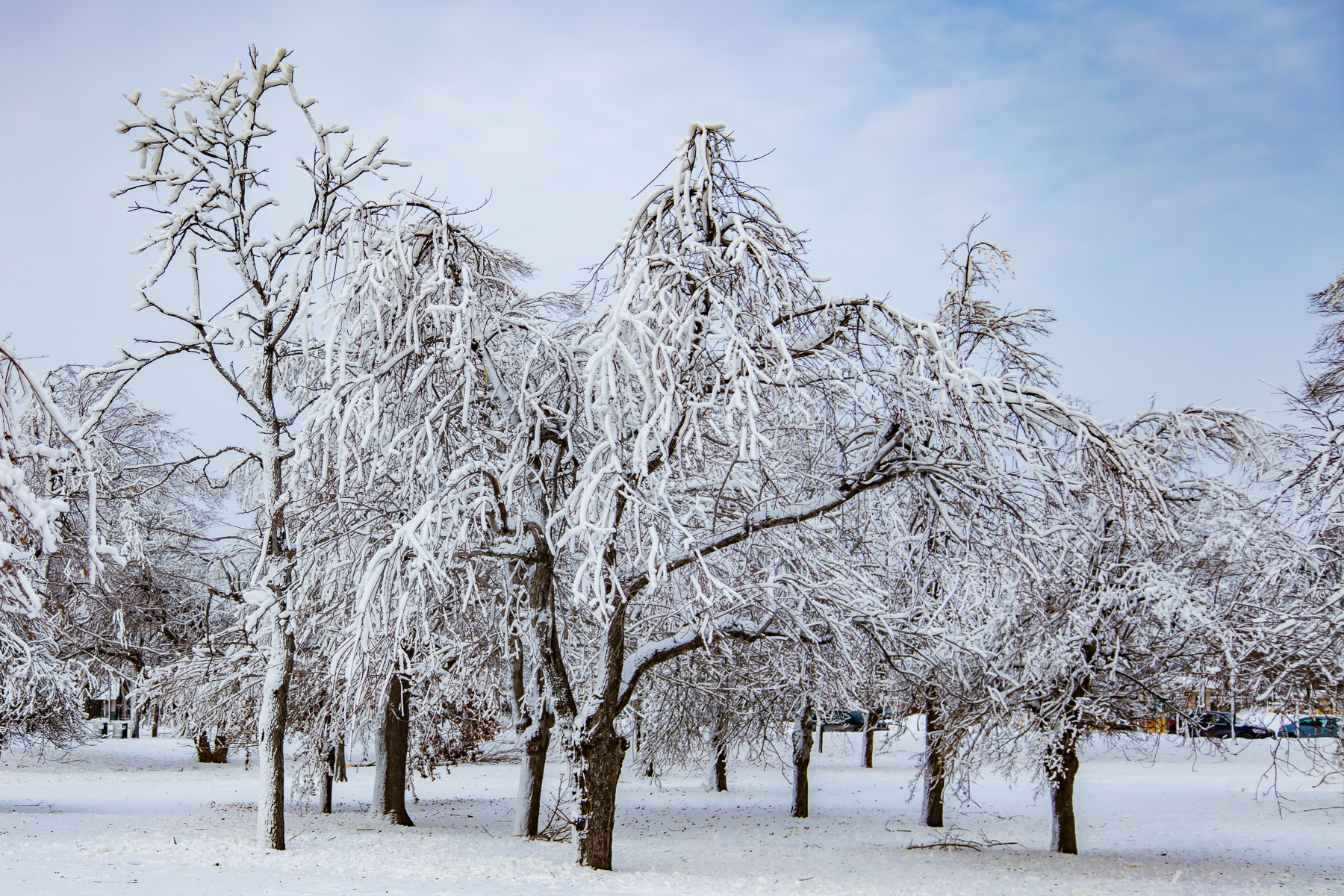 Ice covered trees - Niagara Falls NY - 1Z3A9223
