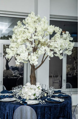 White Blossom Tree 6ft Tall