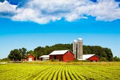farm 2 (2).jpg