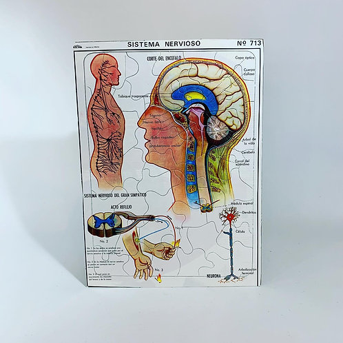 Puzzle Sistema Nervioso