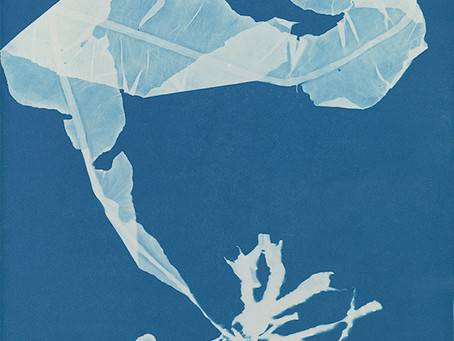 Anna Atkins - the first photobook