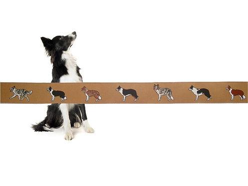 Hunde Webband Borte Border Collie