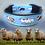 """Thumbnail: Halsband """"Aussie & Schafe"""" mit Lederpolsterung"""