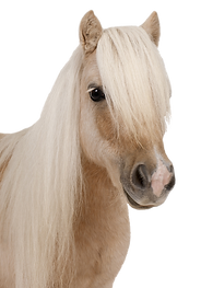 Pferdehalfter individuell