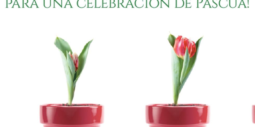 Easter Celebration and Patient Appreciation - April 12, 2019