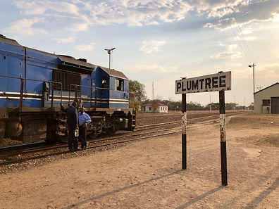 Botswana - Plumtree - Copied from FLICKR
