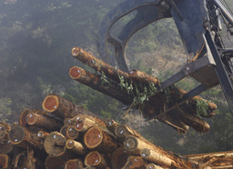 Record-breaking lumber prices boost forest sector