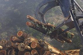 Log Harvesting