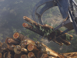 Introducing the WAND Lumber Manufacturing and Forestry Management Taxonomy