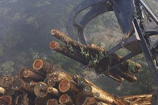 Holzstämme
