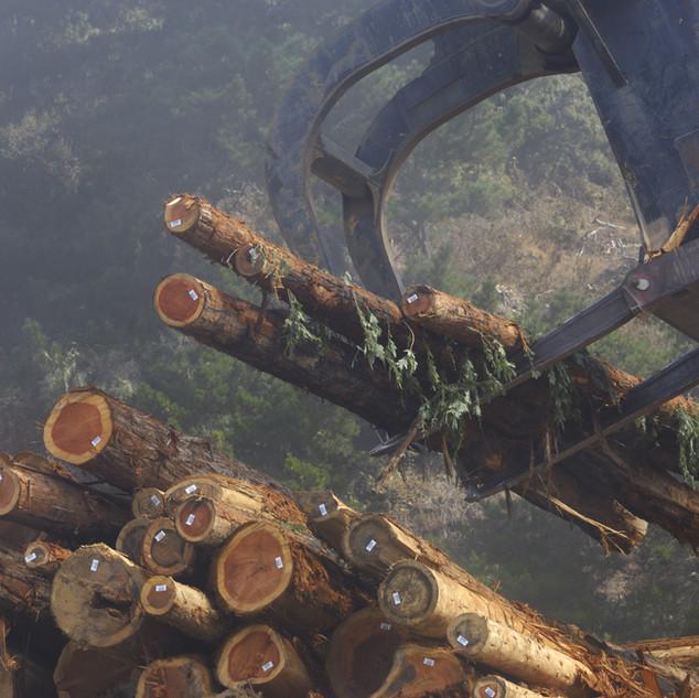 Log Sorting