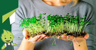 Já ouviu falar dos microverdes?