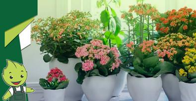 Jardim florido na primavera!