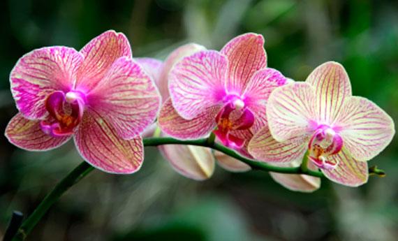 orquídea (12)
