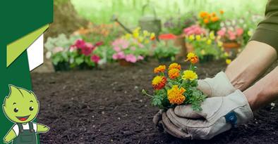 Entramos no mês da primavera. Como estão os cuidados com seu jardim?