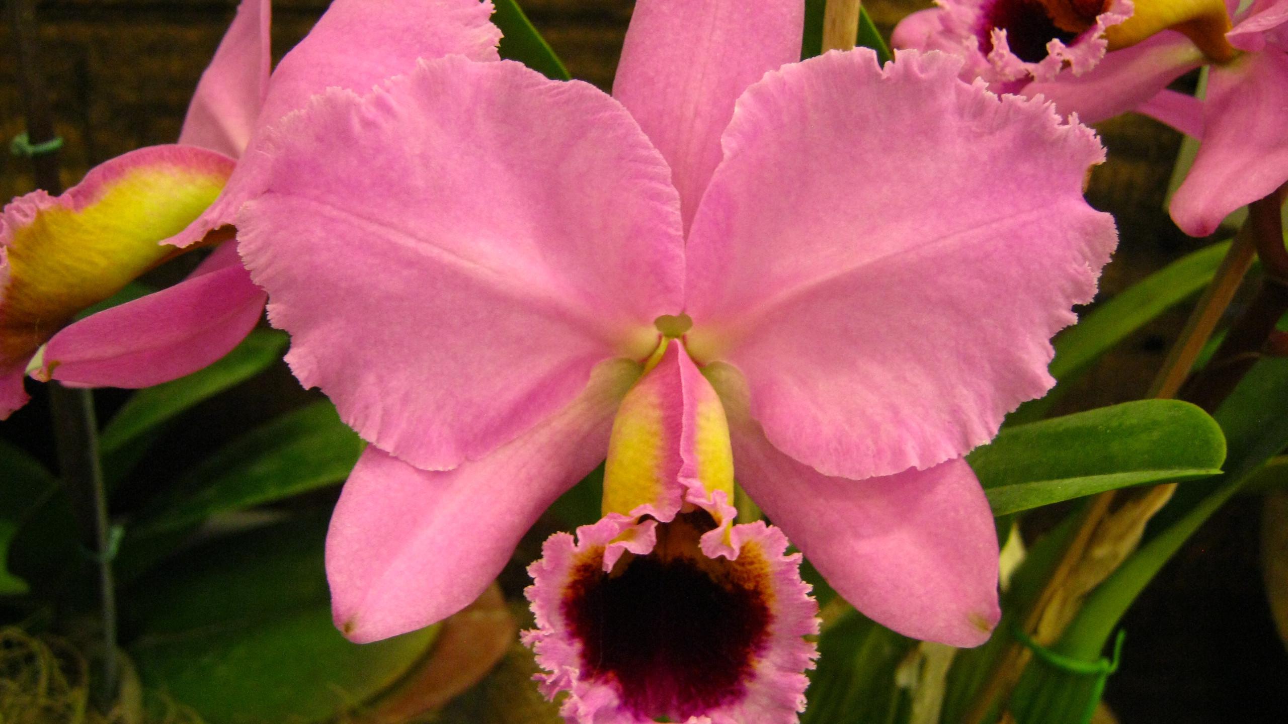 orquídea (4)