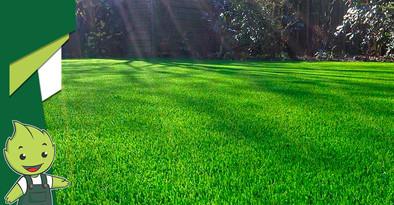 Você conhece a importância da aeração de gramados?