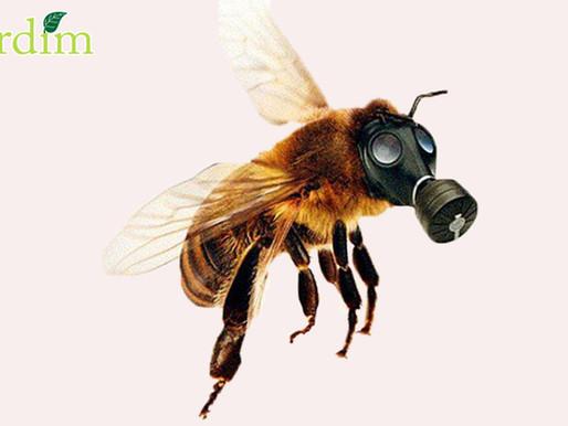 Mais de 37 milhões de abelhas mortas pelo uso de pesticidas.