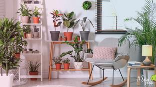 5 motivos para ter plantas em casa