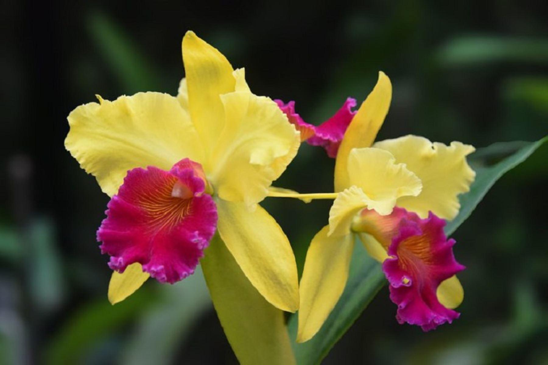 orquídea (2)