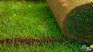 Qual tipo de grama escolher?