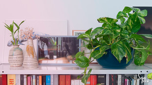 Quer dar uma melhorada no astral da sua casa? Aposte nessas plantas. Ecojardim Jardinagem