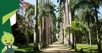 Você sabe o que é um jardim botânico?