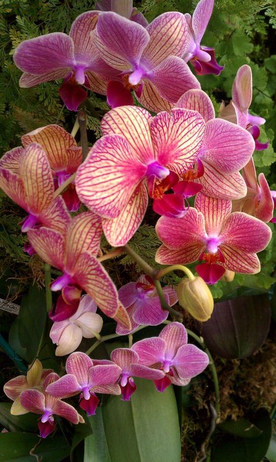 orquídea (3)