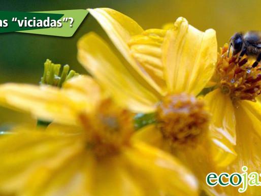 Abelhas desenvolvem dependência química de agrotóxico (como fumantes!)