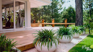 Cuidados para o seu jardim ficar livre da dengue