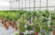 venda-de-plantas.jpg