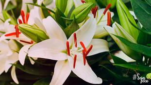 Flores resistentes ao frio   Ecojardim - Serviços de Jardinagem