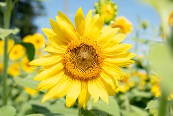 Sun-8194.jpg