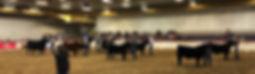 Bull Championship Drive 2019.jpg