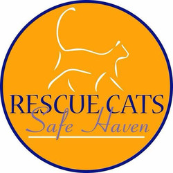 Rescue-Cats-Safe-Haven