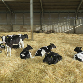 Test before treating heifers at housing (Oct 2021)