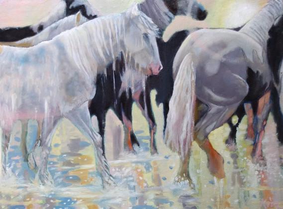 Sea Horses Oil on Canvas  40cm x 51cm.jp