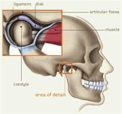 TMJ- Temporomandibular Joint