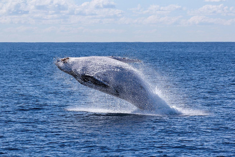 Whale Photo by Georg Wolf on Unsplash v2