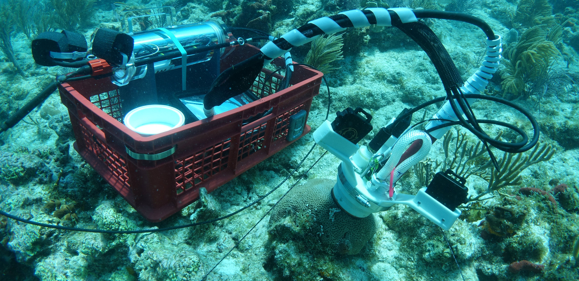 CISME deployed on small coral from its dive crate