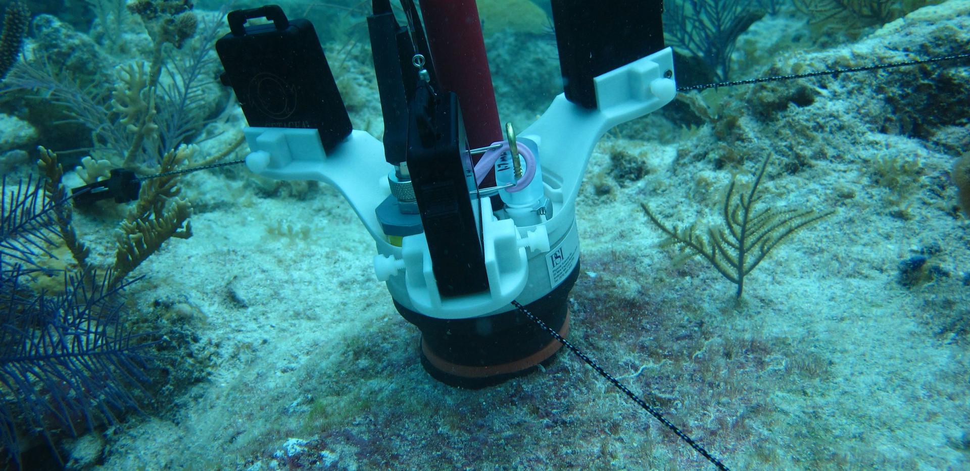 CISME deployed on algal turf