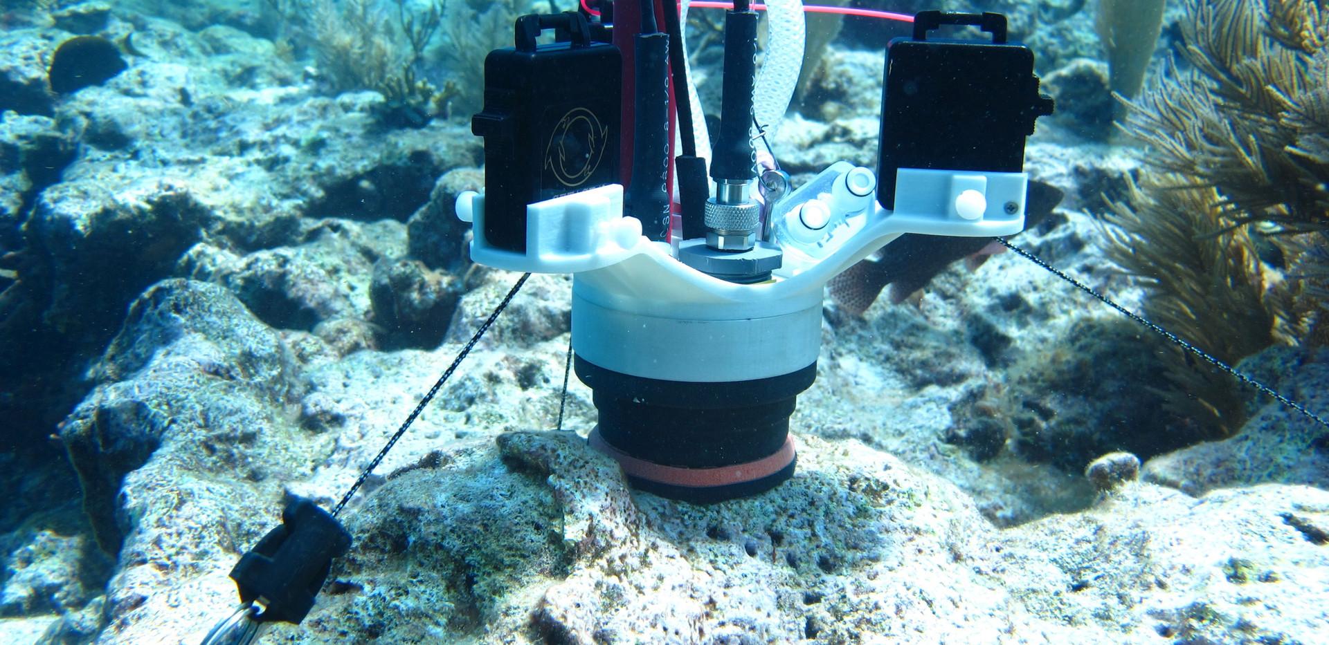 CISME deployed on crustose coraline algae