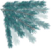 BRANCHES_SAPIN_02.png