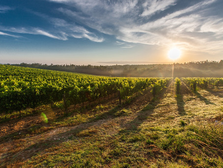 Top 13 Hunter Valley Cellar Doors And More!