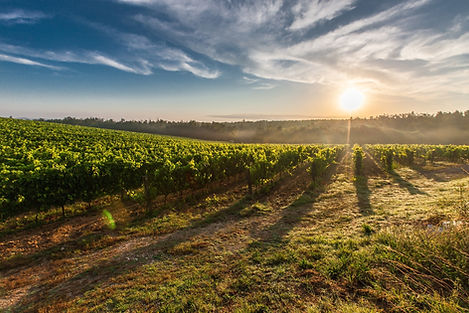 hunter-valley-winery-tours.jpg