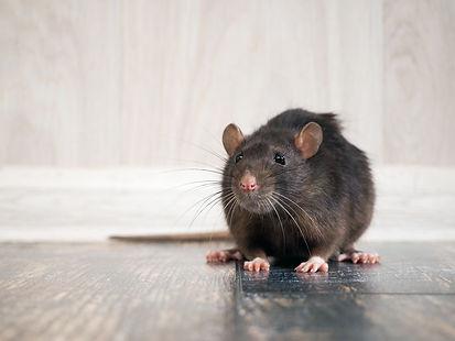 rodent-treatment.jpg