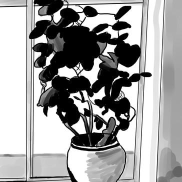 julie's plant