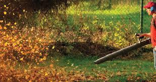Yard Cleaning in Fall.jfif